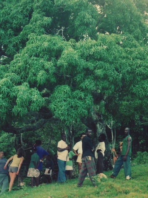 Kindah Tree d'Accompong